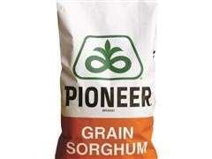 3 Bags Fully Treated Sorghum_Pioneer.jpg