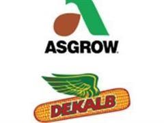 (6) Units Of Seed Corn