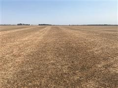 Picture 2021 planted wheat #1.jpg