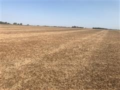 Picture 2021 planted wheat #2.jpg