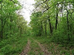 68+/- Acres Pettis County, Missouri